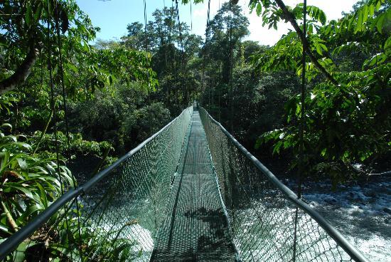 Chilamate Rainforest Eco Retreat: The bridge across the Sarapiqui-river at Tirimbina Eco Reserve