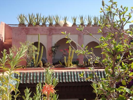 Riad Safar: Sur la terrasse du riad, joliment décorée de plantes grasses et cactus