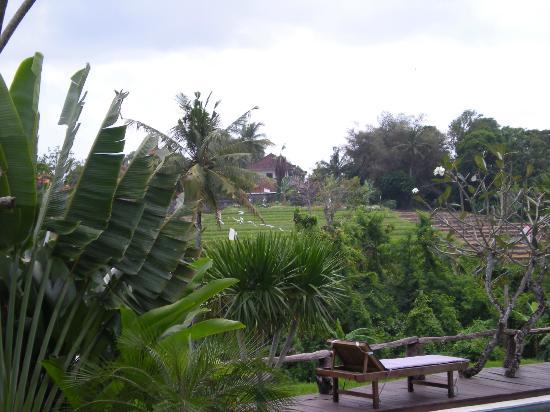 Villa Surya Abadi: vue sur les rizières 