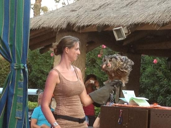 Hotel Olé Tropical: evening entertainment-birds of prey