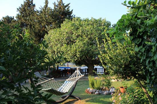 Midas Pension: garden