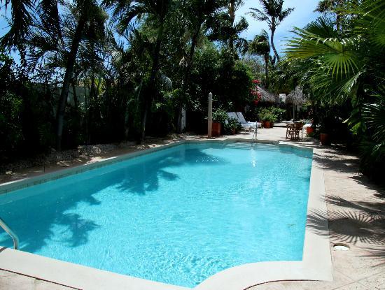 Paradera Park Aruba: Pool