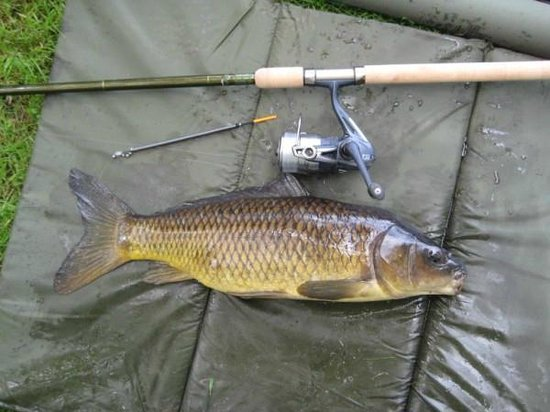 Warner Holme Lacy House Hotel:                   One of the small Carp I caught in the lake.