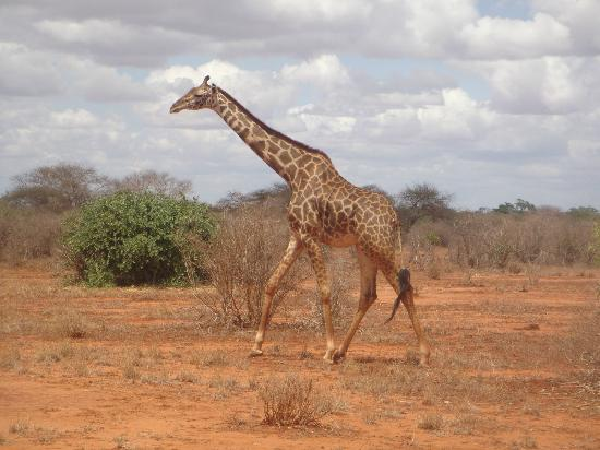 Kingi Safaris - Private Day Tours: Safari in Kenya con Raymond Kingi