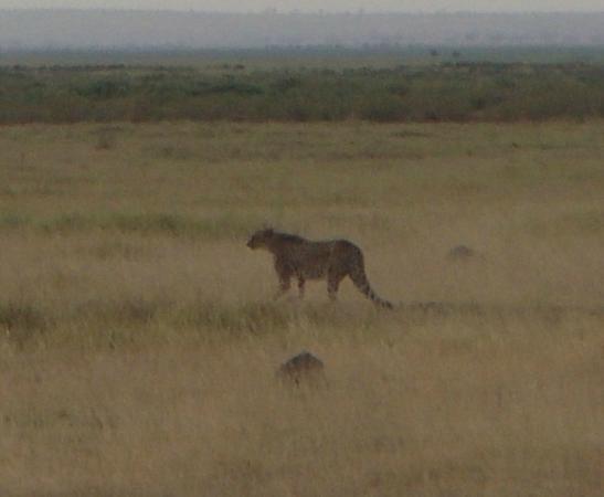 Kingi Safaris - Private Day Tours: Safari in Kenya con Raymond Kingi