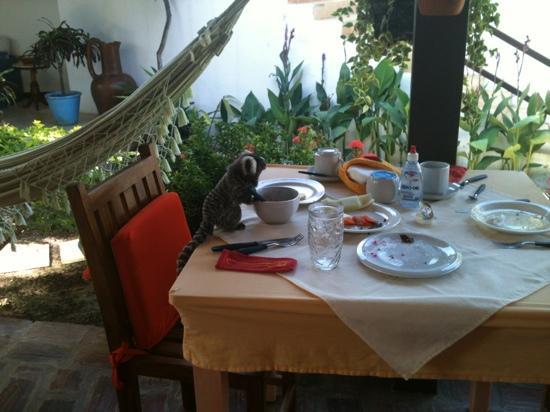 Pousada Papaya: petit déjeuner avec les singes .
