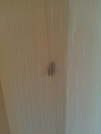 Regency Plaza Aqua Park & Spa Resort: Finding a bug in the room
