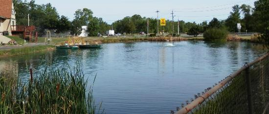 Niagara Falls KOA: Fishing pond (at front gate)