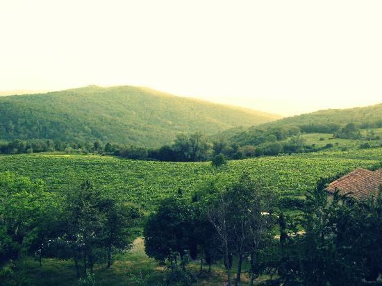 Montelucci Country Resort & Agriturismo di Charme: Vue de la chambre