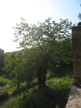 Montelucci Country Resort & Agriturismo di Charme: Terrasse sous la salle de restaurant