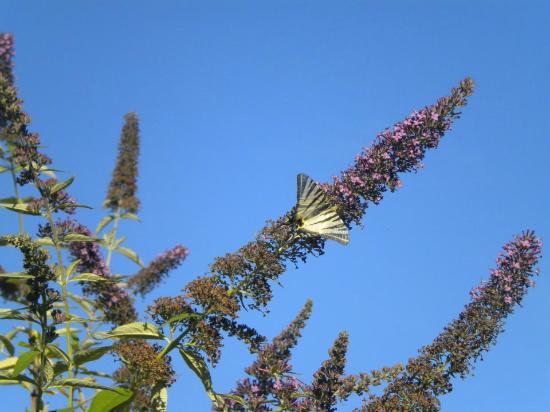 Hotel le Grezalide: jardin aux papillons