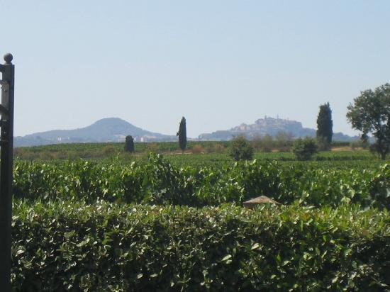 Agriturismo Casa al Bosco: panorama