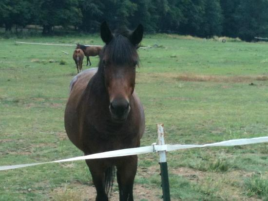 Marble Mountain Ranch - Family Guest Ranch: Just one of the friendly horses!