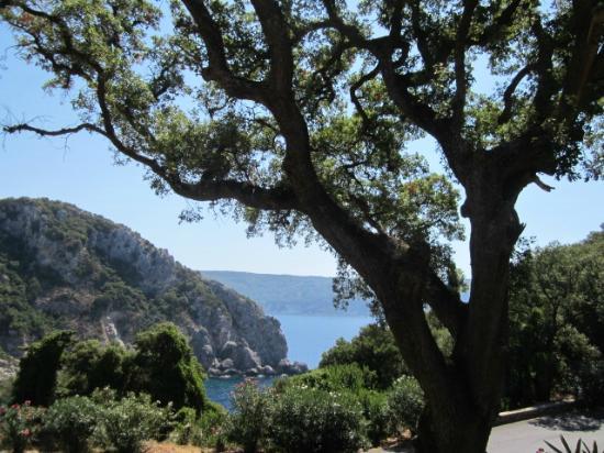 Paleokastritsa Beach: olive tree