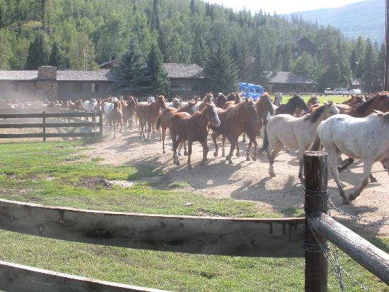 C Lazy U Ranch: Taking the horses out to pasture