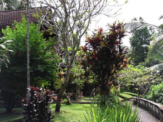 Abangan Bungalow : Jardin