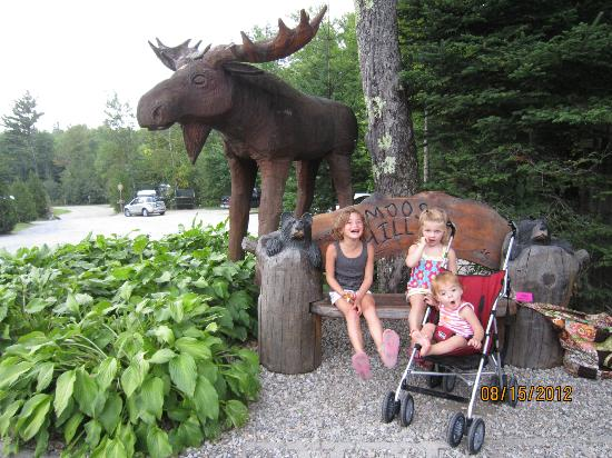 Moose Hillock Campground: the moose