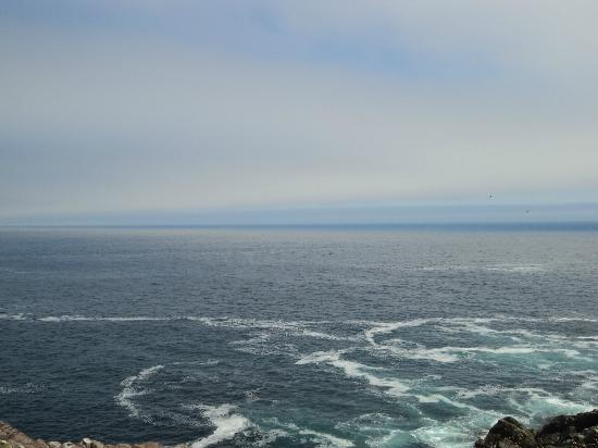 Lighthouse Picnics: Can you spot the minke whale?