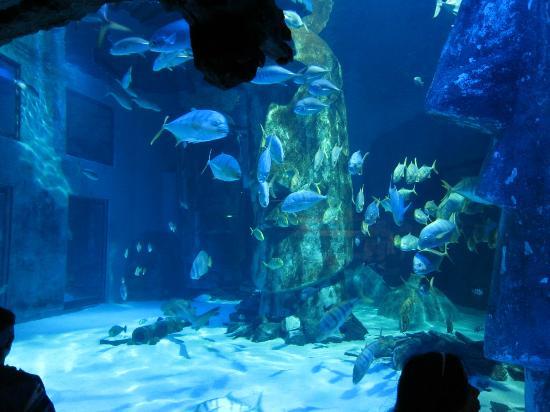 ?? - Picture of Sea Life London Aquarium, London - TripAdvisor