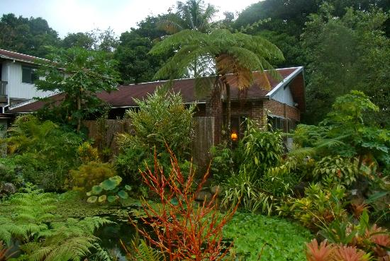 Rainforest Inn: The villa