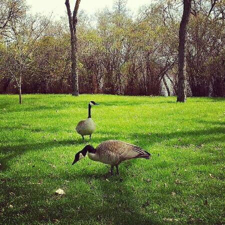 Regina, Canadá: wascana birds