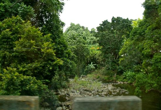 Rainforest Inn: Driving over a small bridge over a stream to get there....