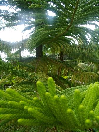 Rainforest Inn: Gorgeous ferns like I've never seen!