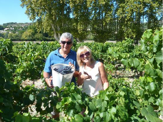 Auberge du Vin: Joining the Harvest