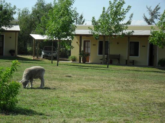 Campanita y de fondo las caba as picture of la trinidad - Casas del campo ...