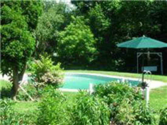 18 Vine Inn & Carriage House: Pool and Grounds