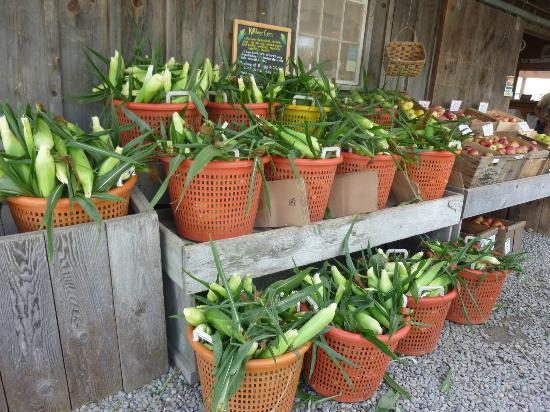 Norwich, VT: Fresh Corn at Kildeer Farm Stand