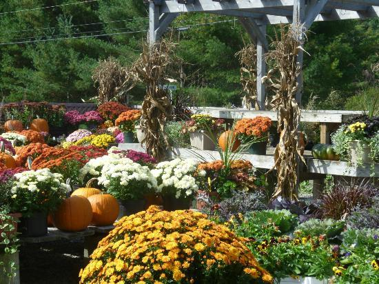 Killdeer Farm Stand: Plants for Sale at Kildeer Farm Stand