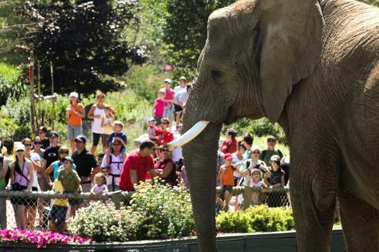 Granby Zoo (Zoo de Granby): Zoo de Granby