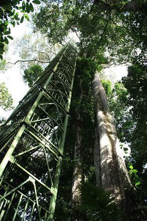 Napo Wildlife Center Ecolodge: Tower