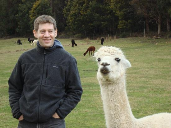 Tin Dragon Trail Cottages: My husband making friends with an Alpaca