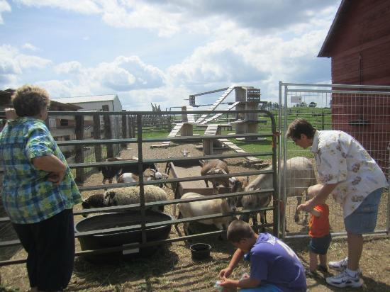 Erickson's Petting Zoo: Feeding the Goats