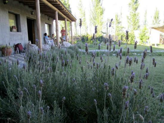 TikayKilla Lodge & Wines: Lavendar fields outside your front door