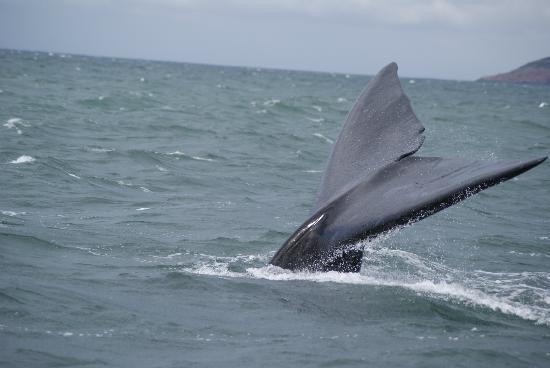 Ocean Safaris: what a tail... a real fairytale ;)