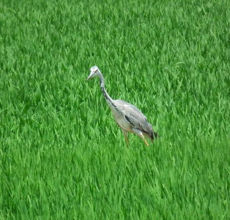 Valencia Birding Birdwatching Tours: Heron