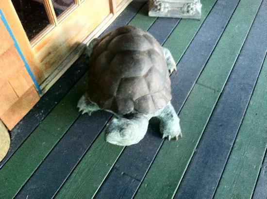 The Blue Water House: Tortoise Security Guard