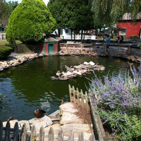 The duck pond in Mystic.