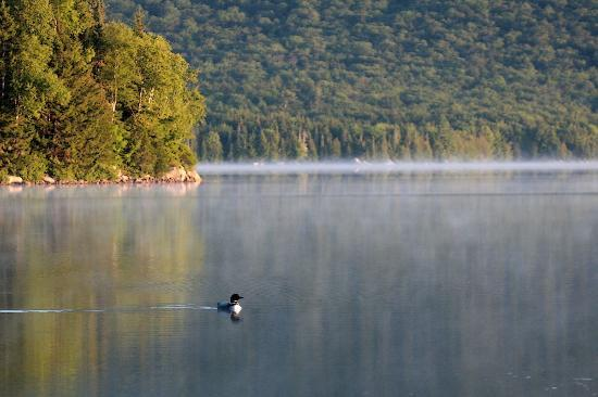 Katahdin Lake Wilderness Camps : A loon on the lake by the morning