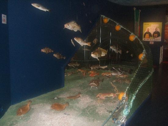 Haliotika - La Cité de la Pêche : museum