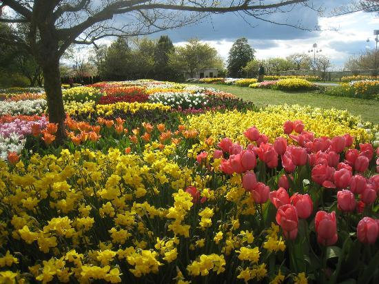 Kennett Square, Pennsylvanie : Tulips in Spring