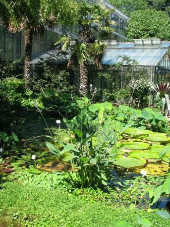 Flora: pond on the entrance of cacti greenhouse