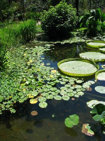 Botanical Gardens Flora : pond with water lilies