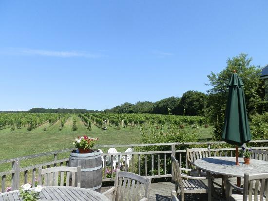 Hampton Inn Long Island - Brookhaven: vineyards