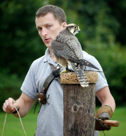 The International Centre for Birds of Prey: Bird + Human on the same level