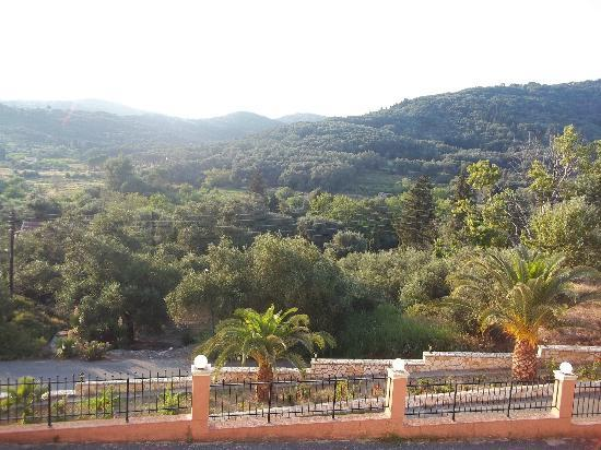 Theo's Hotel: View from restaurant over the olive grove.