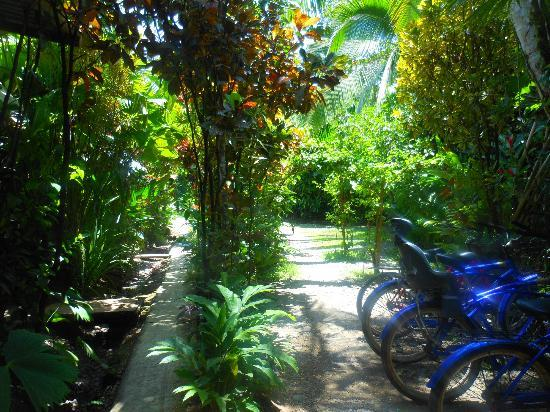 Walaba Hostel & Beach Houses: Green lush grounds...and bikes to rent!